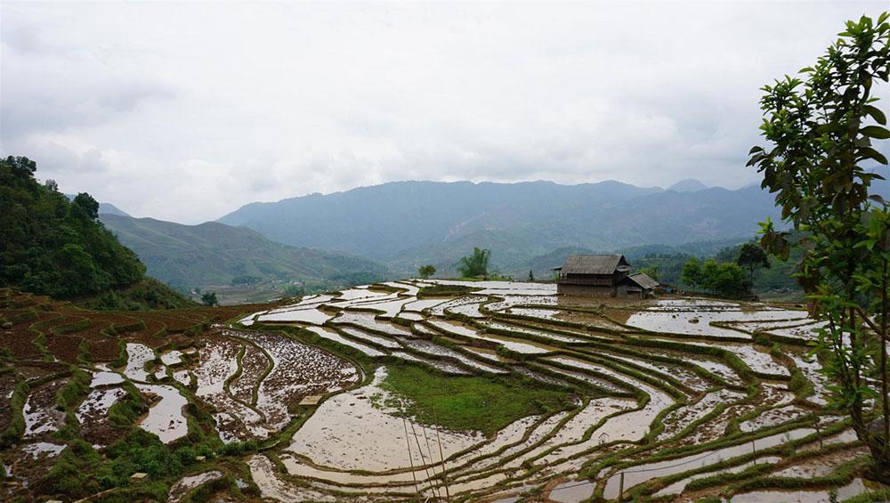 bach-moc-luong-tu-peak-5