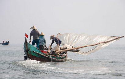 Fishermen in central Vietnam are enjoying a bumper shrimp season