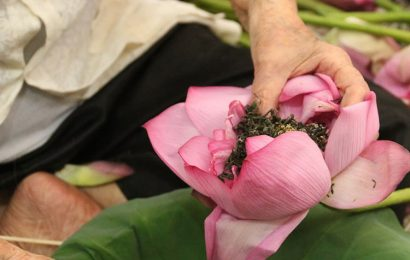 The art of embalming lotus tea in Hue requires concentration and dexterity