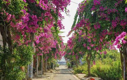 Paper flowers sets Nha Trang on Vietnam's central coast simmering