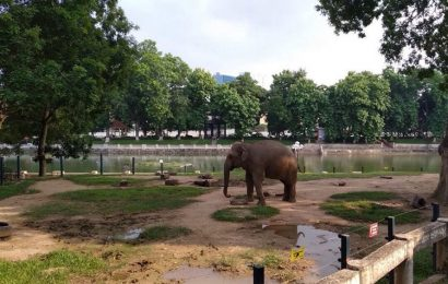 Hanoi Zoo has yet to lure its usual crowds following social distancing