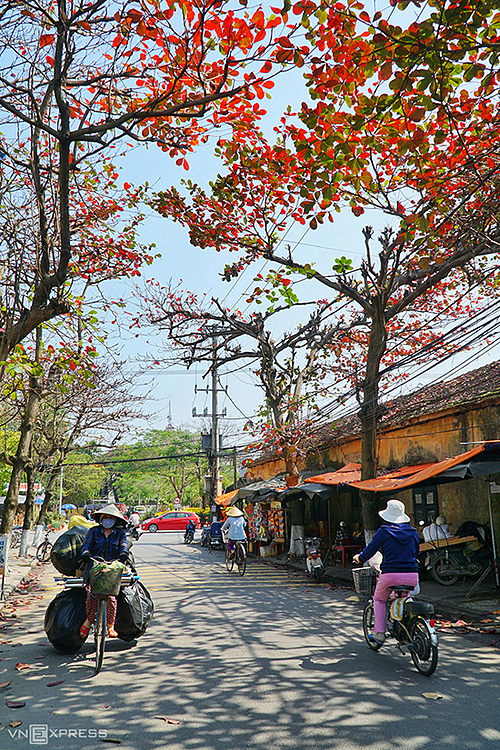 Malabar-almond-trees-add-flamboyance-to-the-ancient-town-of-Hoi-An-6