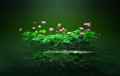 Top 50 beautiful lotus wallpapers enchanting hearts full quality hd