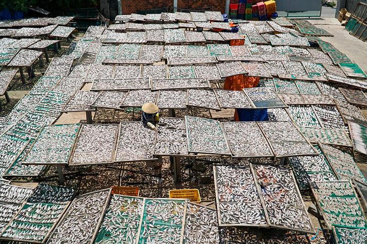 Make drying fish in Phuoc Hai Town in Ba Ria-Vung Tau