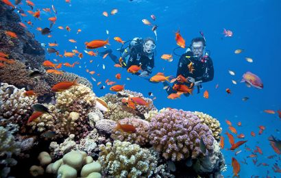 The beauty of coral reefs, fish at popular diving spots throughout Vietnam